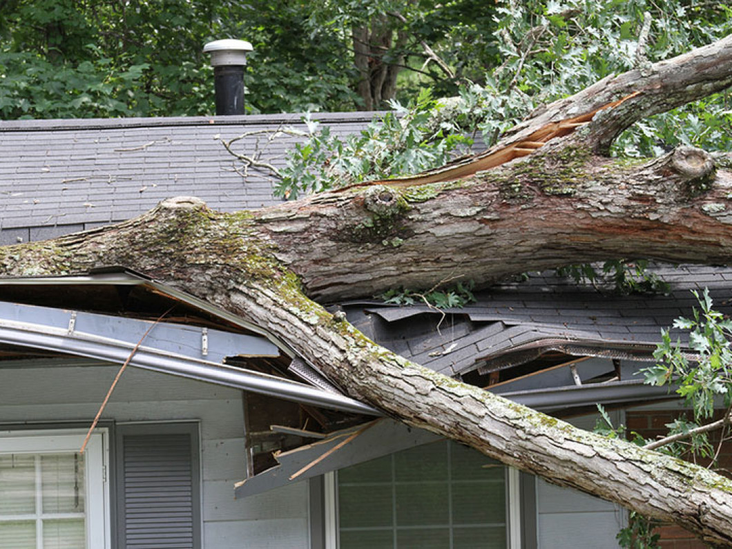 Is your tree situation truly an emergency?