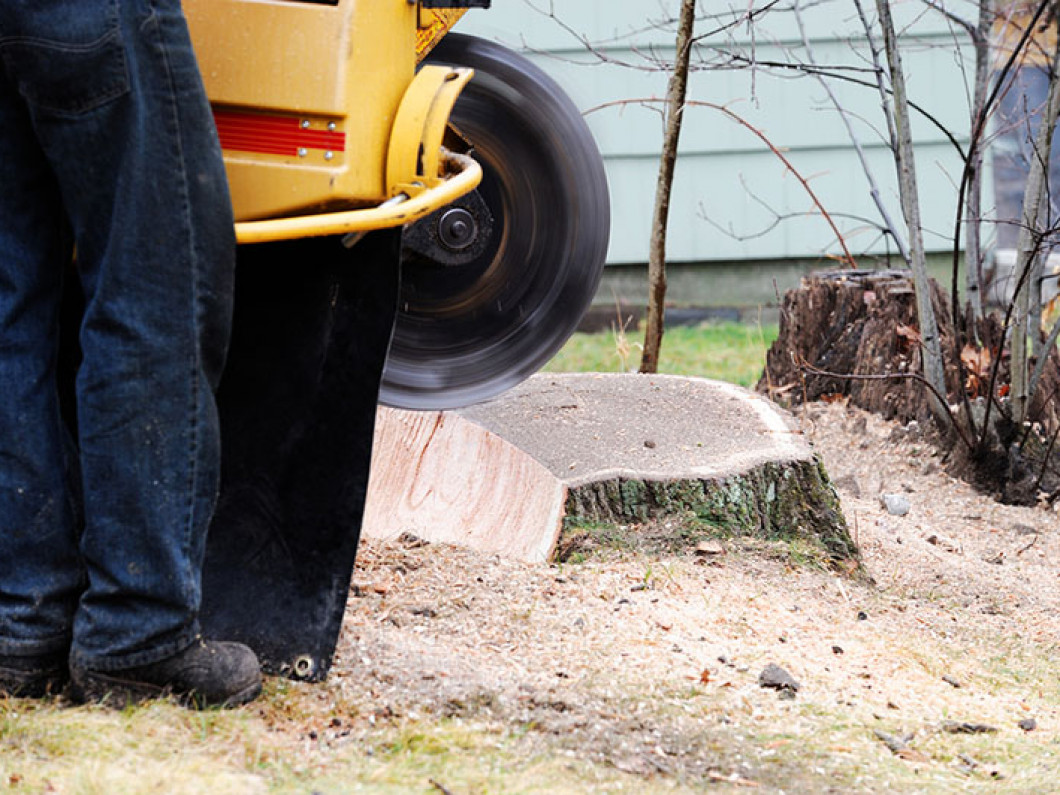 Do you have to remove a stump from your lawn?